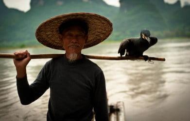 cormorant fsihing2